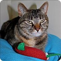 Adopt A Pet :: Lola - Duluth, MN