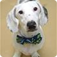 Adopt A Pet :: OSCAR (ECAS Kennel C4) - Pleasanton, CA