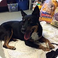 Adopt A Pet :: Taffee - San Leon, TX