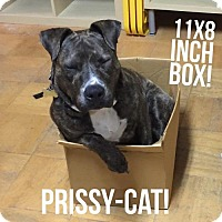 Adopt A Pet :: Priscilla - Richmond, CA