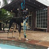 Shepherd (Unknown Type) Mix Dog for adoption in Austin, Texas - Daphne