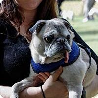 Adopt A Pet :: 2016-3008 Simon - Summerfield, NC