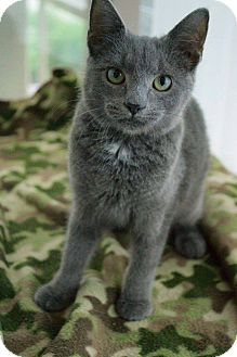 Domestic Shorthair Cat for adoption in Prince George, Virginia - Tyra