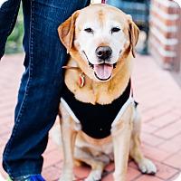 Adopt A Pet :: Lady Larry - Los Angeles, CA