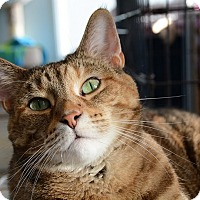 Adopt A Pet :: Tiggy - Chicago, IL