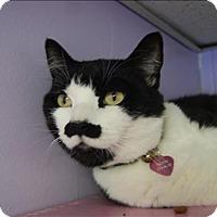 Adopt A Pet :: Charlie - Abbotsford, BC