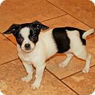 Adopt A Pet :: Jujube