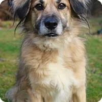 Adopt A Pet :: Carmen - Chester Springs, PA