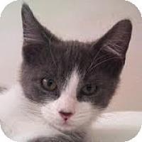 Adopt A Pet :: Ryder - Modesto, CA