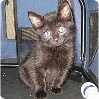 Adopt A Pet :: Satin - Modesto, CA