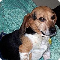 Adopt A Pet :: Spalding - Novi, MI