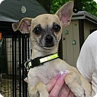 Adopt A Pet :: Chloe - South Amboy, NJ