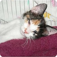 Adopt A Pet :: Sassy Purrletta - Brea, CA