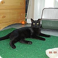 Adopt A Pet :: Sinbad - CARVER, MA