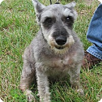 Adopt A Pet :: Coby - Laurel, MD