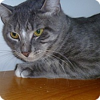 Adopt A Pet :: Cootie - Hamburg, NY