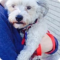 Adopt A Pet :: *URGENT* Jenny - Van Nuys, CA