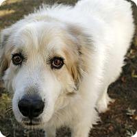 Adopt A Pet :: Truman  Adopted - Tulsa, OK