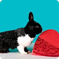 Adopt A Pet :: Parfait - Marietta, GA
