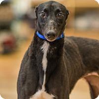 Adopt A Pet :: Elisha - Aurora, IN