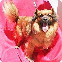 Adopt A Pet :: Biggs - Umatilla, FL
