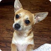 Adopt A Pet :: Carmen **Diamond Dog $125 Adoption Fee** - McKinney, TX