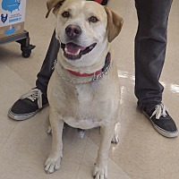 Adopt A Pet :: Muttley - Quail Valley, CA