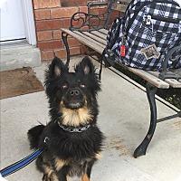 Adopt A Pet :: Chubby - Keswick, ON