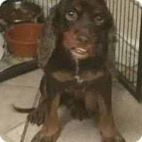 Adopt A Pet :: Camille - Phoenix, AZ