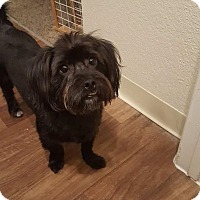 Adopt A Pet :: Moonlight - Las Vegas, NV