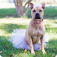 Adopt A Pet :: Jewel - Monroe, NC