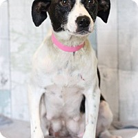 Adopt A Pet :: Momma - Waldorf, MD