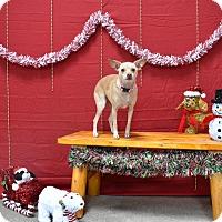 Adopt A Pet :: Daphne - Vacaville, CA