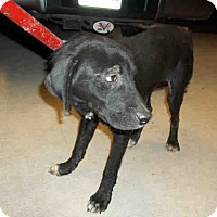 Adopt A Pet :: Connor - Newnan City, GA