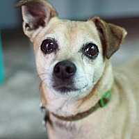 Adopt A Pet :: Riley - Canyon Country, CA