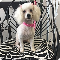 Adopt A Pet :: Phoebe - La Verne, CA