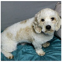 Adopt A Pet :: Quincy - Forked River, NJ