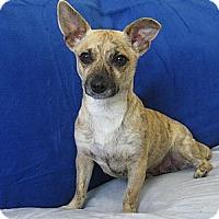 Adopt A Pet :: Goldie - Tumwater, WA