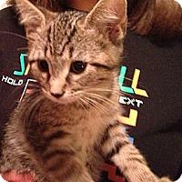 Adopt A Pet :: Diesel - Troy, OH