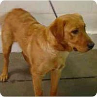 Adopt A Pet :: Beckman - Cumming, GA