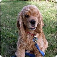 Adopt A Pet :: Jerome - Tacoma, WA