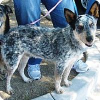 Adopt A Pet :: Sergio - Adoption Pending - Phoenix, AZ