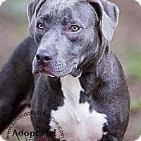 Adopt A Pet :: Mittens - Orlando, FL