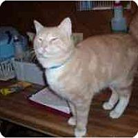 Adopt A Pet :: Carson - Hamburg, NY