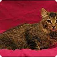 Adopt A Pet :: Kai - Sacramento, CA