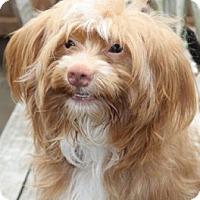 Adopt A Pet :: Chaucer - Meet Him!! - Norwalk, CT