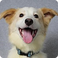 Adopt A Pet :: Cody - Minneapolis, MN