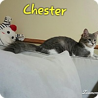 Adopt A Pet :: Chester - McDonough, GA