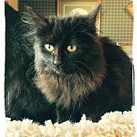 Adopt A Pet :: Natasha - Olmsted Falls, OH