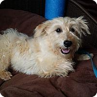 Adopt A Pet :: Ashton - Lawrenceville, GA
